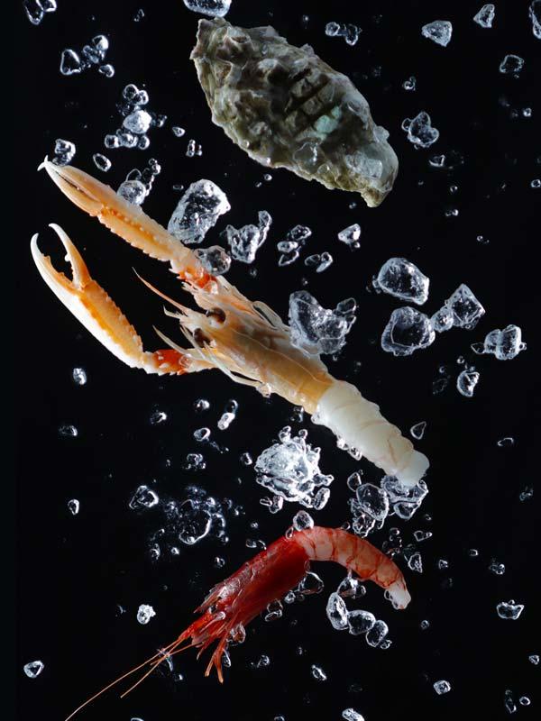 Piatto di pesce crudo ristorante Dime Bistrot Marghera